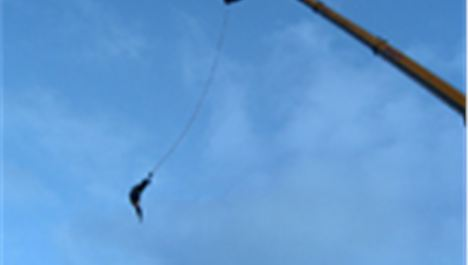 Yes Man bungee jump