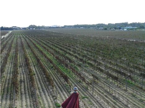 A Roman legionnaire standing guard over the vines